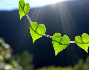 Kopia green-hearts-leaves-nature-favim_com-162433